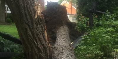 Reasons You Might Need Tree Removal, Cincinnati, Ohio