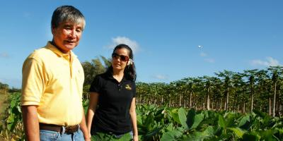 See the Farm-to-Table Movement in Action at Oahu's Kahuku Farms, Kahuku, Hawaii