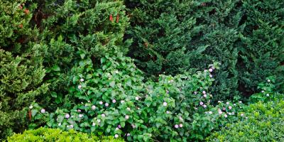 Shrubs or Trees? How to Decide What Works Best for Your Yard, Kahului, Hawaii