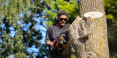 3 Reasons You Should Consider Tree Removal, Kalispell, Montana