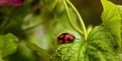 3 Tips to Prevent Garden Pests Naturally, Koolaupoko, Hawaii