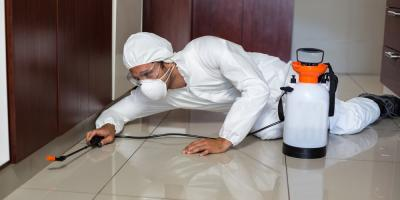 5 Pest Control Tips to Rid Your Home of Centipedes, Koolaupoko, Hawaii