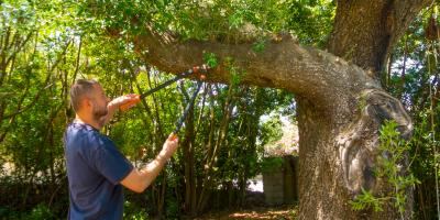 How Tree Maintenance Helps Prevent Pests, Koolaupoko, Hawaii