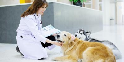 4 Ways to Help Your Dog Relax Before a Vet Exam, Ewa, Hawaii