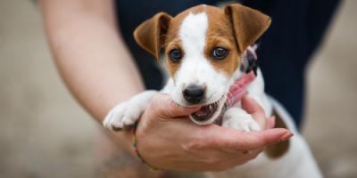 February 2018 Is National Pet Dental Health Month, Ewa, Hawaii