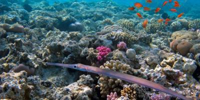 5 Fish You May See When Snorkeling with Ko Olina Ocean Adventures, Ewa, Hawaii