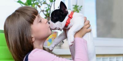 How to Care for Your Pet's Teeth, Ewa, Hawaii