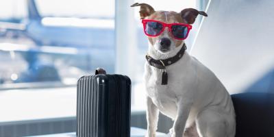 3 Tips for Preparing Your Pooch for Summer Dog Boarding, Keaau, Hawaii