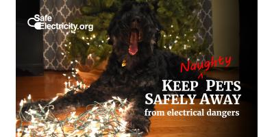 Keep your pets safe this holiday, Hernandez, New Mexico