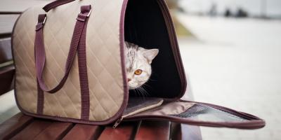 3 Tips to Prepare Your Cat for a Kennel Stay, Hilo, Hawaii