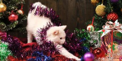 How to Keep Your Cat Off Your Christmas Tree, Covington, Kentucky