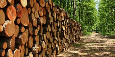 3 Benefits of Logging You May Not Know, Morehead, Kentucky