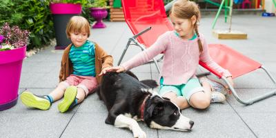 FAQ About Homeowners Insurance for Dog Owners , Lexington-Fayette Central, Kentucky