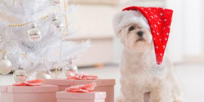 Pet Care Holiday Edition: Tips for Buying Doggie Christmas Presents, Covington, Kentucky
