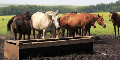 What Are the Benefits of Miraco® Livestock Waterers?, Seventy-Six, Iowa