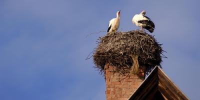 3 Steps to Take if You Have Birds in Your Chimney, Kernersville, North Carolina