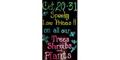 Halloween Sale, Delhi, Ohio