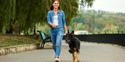 5 Reasons to Get Your Dog to the Veterinarian Immediately, Kingman, Arizona