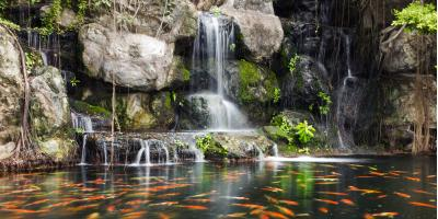 Your Spring Guide to Caring for Your Koi Pond, Columbia, Missouri