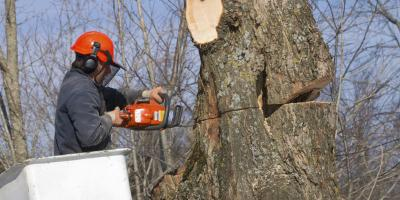 5 Important Tips for Trimming Trees in Your Backyard, West Hartford, Connecticut