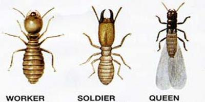 How Frequently Do You Need Termite Inspections?, Lexington-Fayette, Kentucky