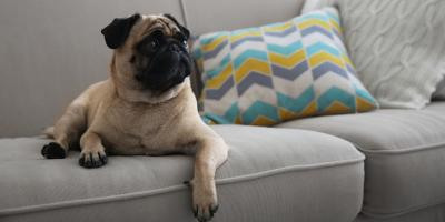4 Ways to Puppy-Proof Your Furniture, Branson, Missouri