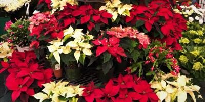Holiday Gift Finds at Your Local Flower Shop, Lakeville, Connecticut