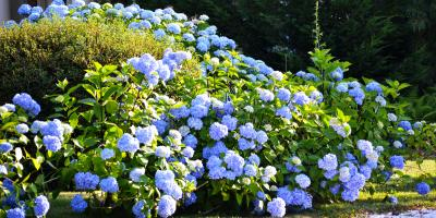 3 Tips for Caring for Bushes & Shrubs, Lancaster, South Carolina