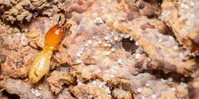 How to Prevent a Costly Termite Infestation, Roxbury, New Jersey