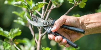 5 Popular Garden Plants & Tips for Pruning Them, Valley Park, Missouri