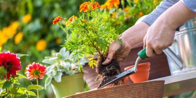 The Top 3 Weed Control Tips for Your Garden, Enterprise, Alabama