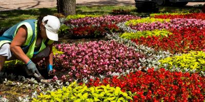 Why Edging Is Important for Landscape Design, Honolulu, Hawaii