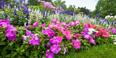 Top 4 Perennials That Are Perfect for Your Garden , Lincoln, Nebraska