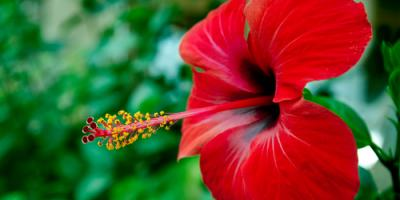 5 Low-Maintenance Plants for New Gardeners, Koolaupoko, Hawaii