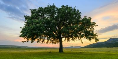 3 Native Texas Trees for Your Landscaping, Canyon Lake, Texas
