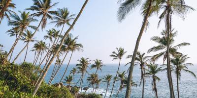 Palm Tree Trivia, Koolaupoko, Hawaii