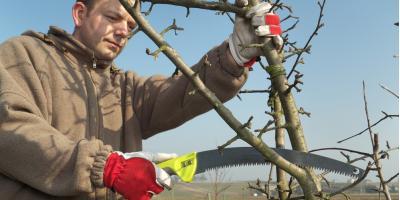 Tree Pruning: A Seasonal Guide to Healthy Trees, York, South Carolina