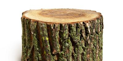 3 Signs It's Time to Call a Landscaping Company for Tree Removal , Hamilton, Ohio