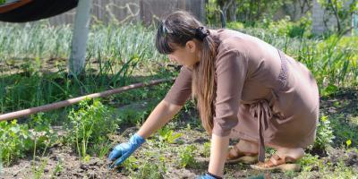 4 Natural Weed Killers for Your Yard, Austinburg, Ohio