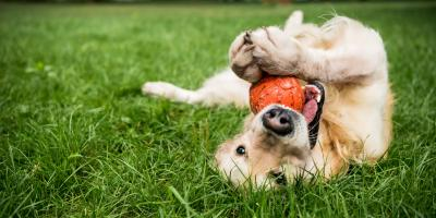 4 Lawn Care Tips for Dog Owners, Fort Worth, Texas