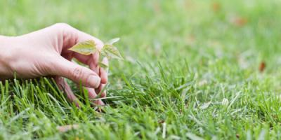 Lawn Care Experts Share 3 Common Causes for Brown Spots, Rockwell, North Carolina