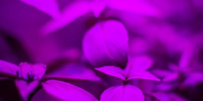 Your Guide to Hydroponic LED Grow Lights, Tipp City, Ohio
