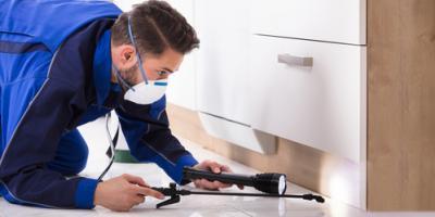 3 Benefits of Having Regular Termite Inspections, Lewisburg, Ohio