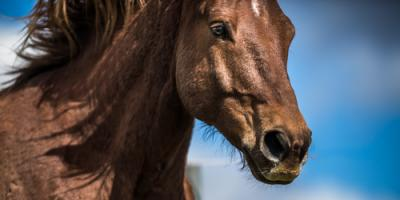 Lexington Attorney Shares 3 Facts About Kentucky's Equine Liability Laws, Lexington-Fayette Central, Kentucky