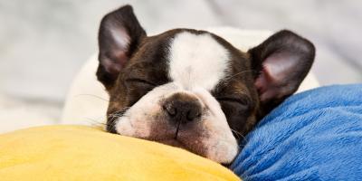 3 Best Dogs for Apartment Living, Lexington-Fayette, Kentucky