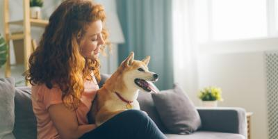 3 Tips for Choosing the Right Pet for an Apartment, Lexington-Fayette, Kentucky