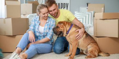 5 Tips for Introducing Your Dog to a New Apartment, Lexington-Fayette, Kentucky