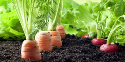 How to Choose Vegetable Garden Fertilizer, Lexington-Fayette, Kentucky