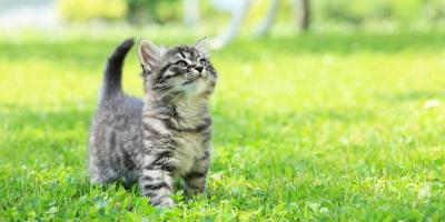 National Immunization Awareness Month: Why Animal Vaccines Are So Important, ,