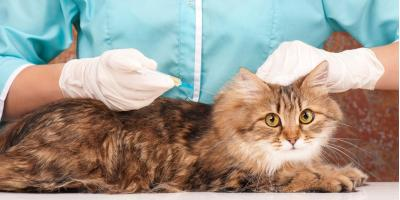 The Importance of Getting Animal Vaccines for Your Pets, ,